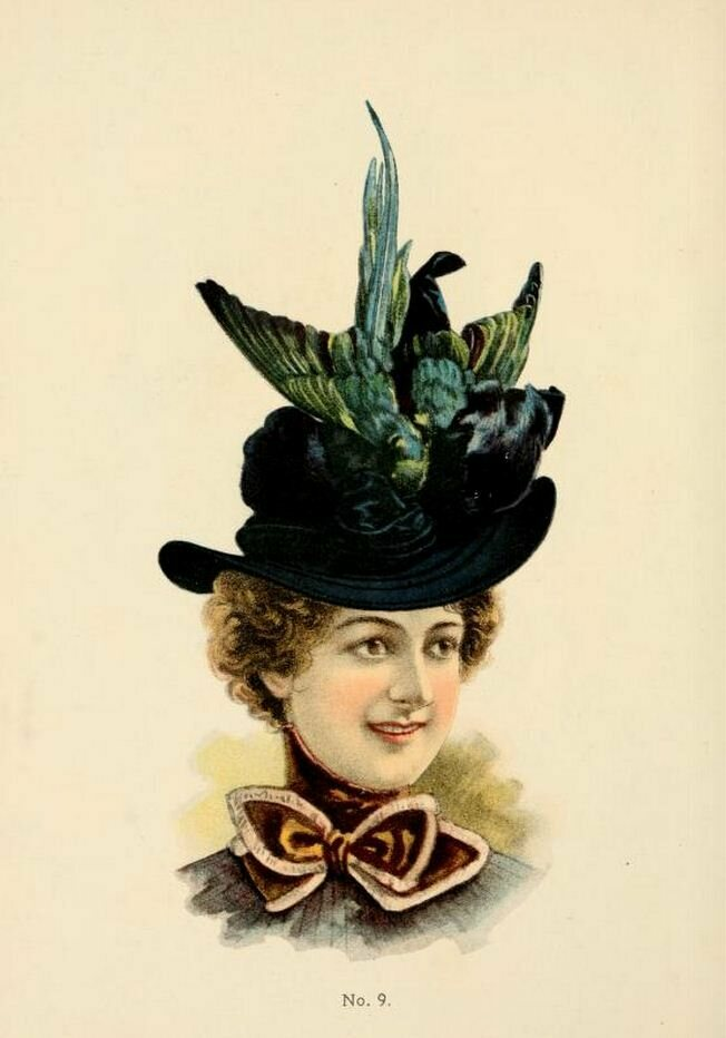 In the late 19th century, there was a particular vogue for hats with whole, or partial, birds on them, as seen in this 1899 O'Neill catalog. The threat to birds helped end the trend.