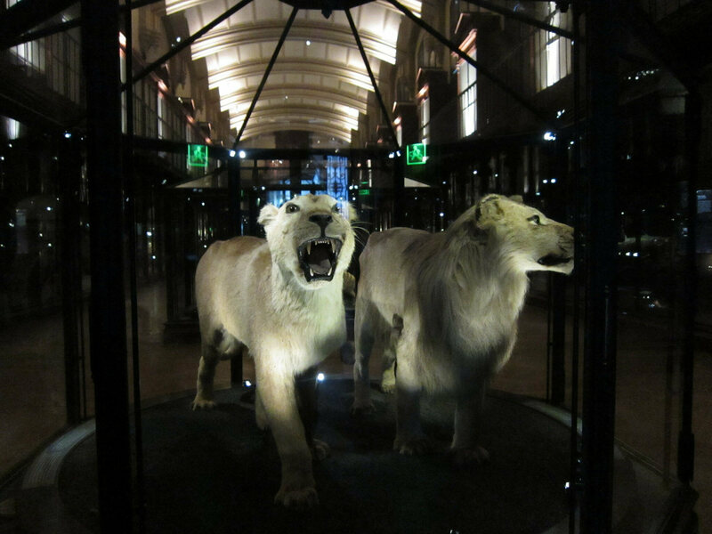 All That Remains A Haunting Gallery Of Extinct Animals In