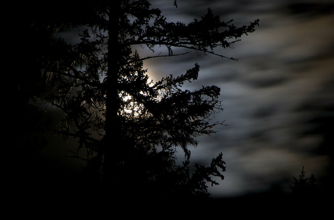 Strictly nocturnal, flying squirrels are most active just after midnight and travel through the dark forest along regular routes that link their numerous ground caches.