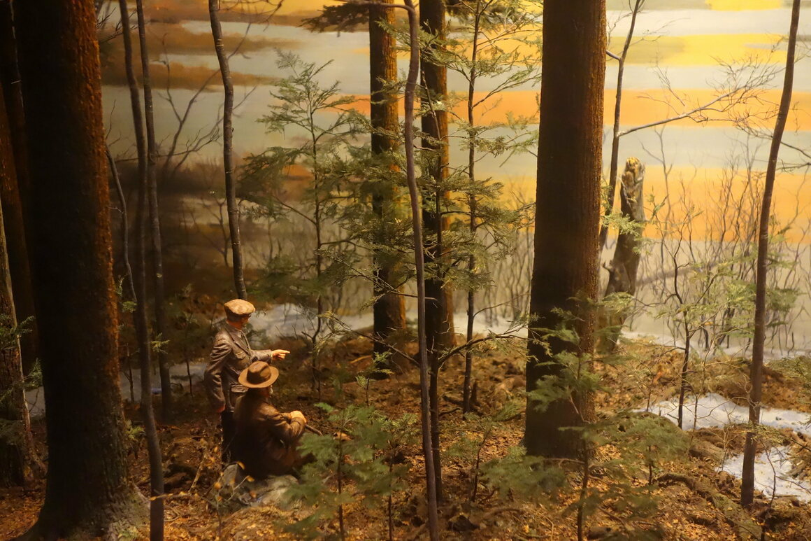 Hemlock-White Pine Forest and Harvard Pond dioramas at the Fisher Museum.