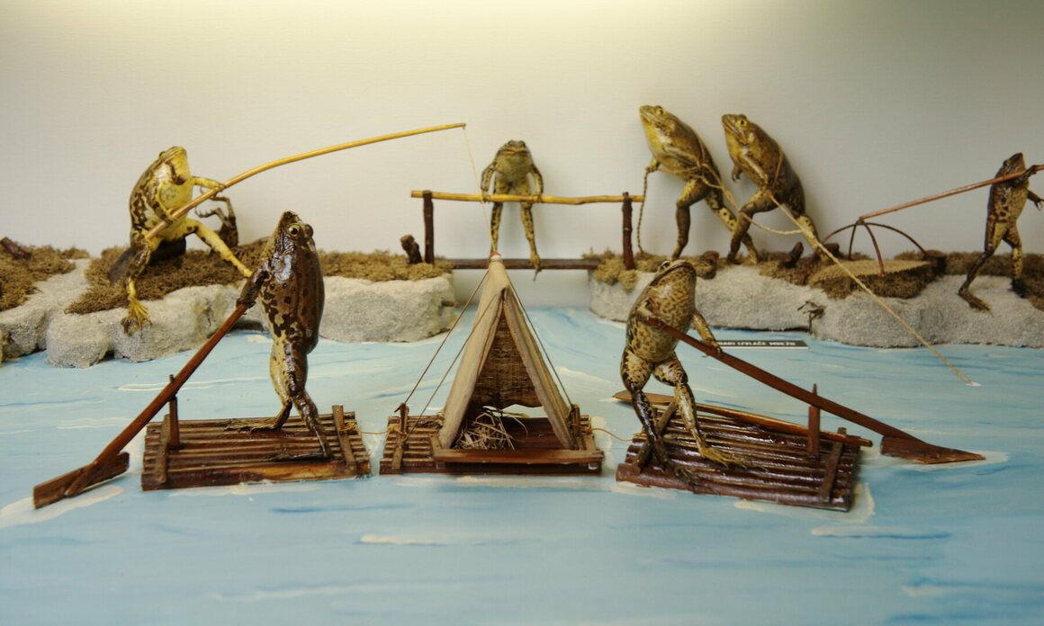 Taxidermied frogs spend a day on the lake at Froggyland.