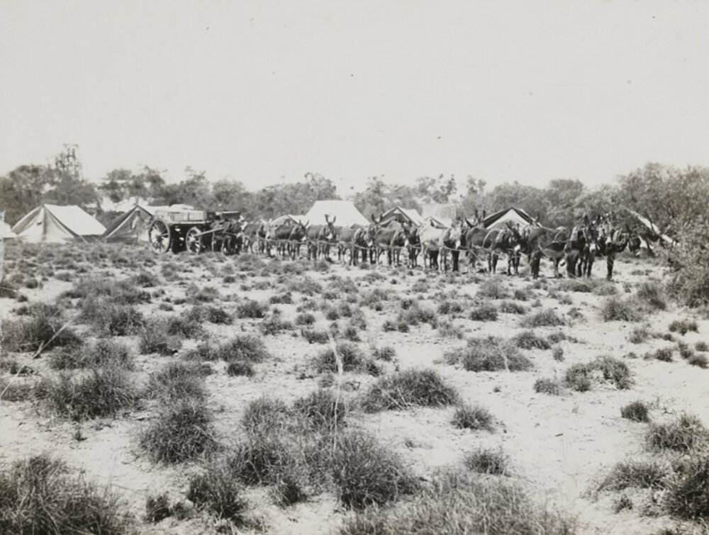 Donkey wagons hauling supplies to the camp.