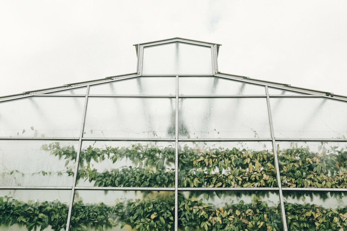 The Oxford Botanic Garden inspired the photographers to visit more greenhouses.