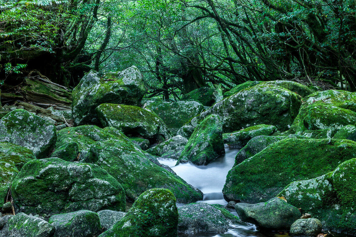 Flowing water in a brook appears to make a green moss-covered rock rise up from among its neighbors.