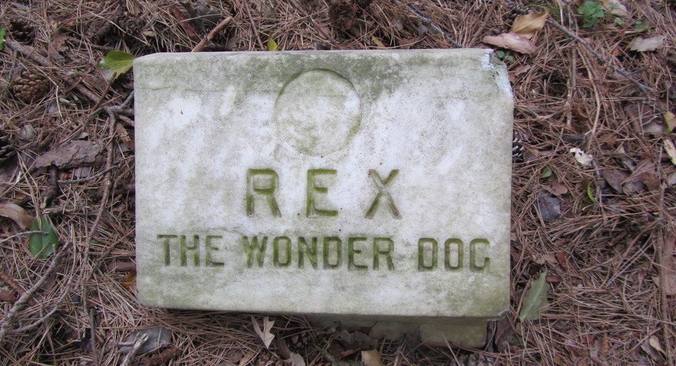 Rex the Wonder Dog gravestone.