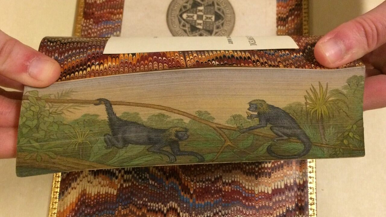 Spider monkeys from a fore-edge painting on The Natural History of Monkeys (1838)