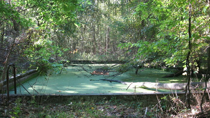 Rose island charlestown indiana atlas obscura for What to do with old swimming pool