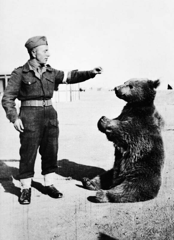 A soldier, possibly Peter Prendys, helps Wojtek engage in his favorite activity—snacking. (Photo: WikiCommons/Public Domain)