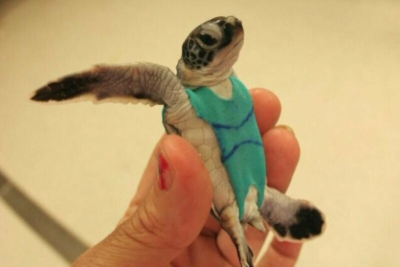 A sea turtle hatchling, playful and spunky in a piece from the Vision Research Collection.