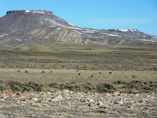 This photo was taken during lek counts in April, 2010 in core sage-grouse habitat in south central Wyoming. North Table Rock is in background.