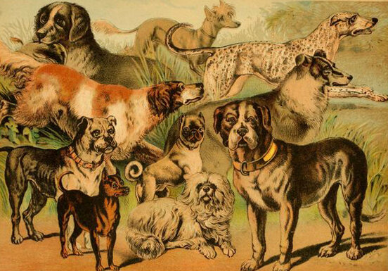 What Is the Point of a Pug—And 19 Other Dog Breeds? - Atlas Obscura