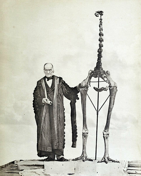 Richard Owen photographed in 1879 next to the largest of all moa, Dinornis maximus (now D. novaezealandiae), while holding the first bone fragment he had examined 40 years earlier.