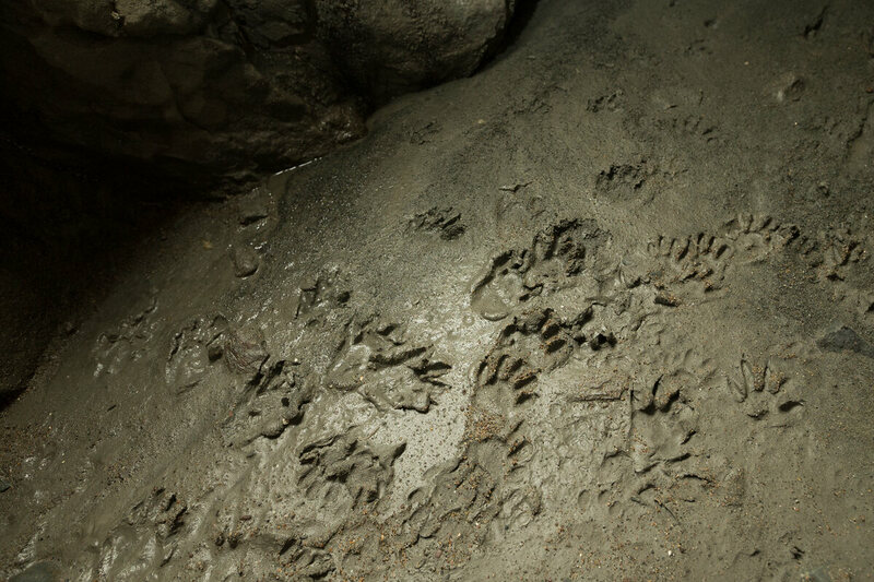 Recent raccoon footprints are evidence of the tunnel's only regular visitors.