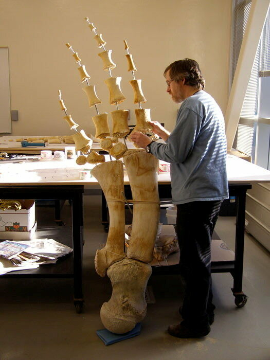 Lee Post working on a recent whale articulation