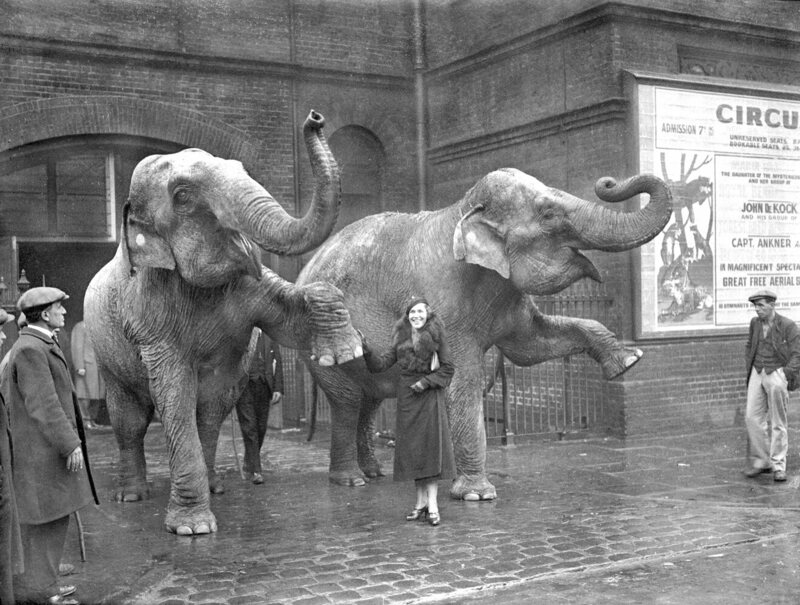 Rasputin's daughter as animal trainer at London circus - 23-December-1934