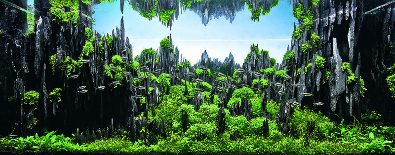 "Michael Leroy's ""The Stone Forest"" uses reflection to design advantage, and took 23rd."