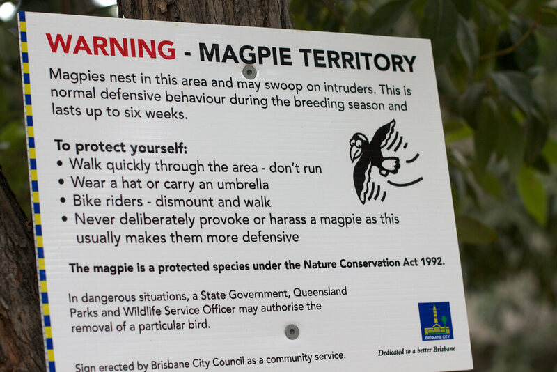 A magpie warning sign in Brisbane.