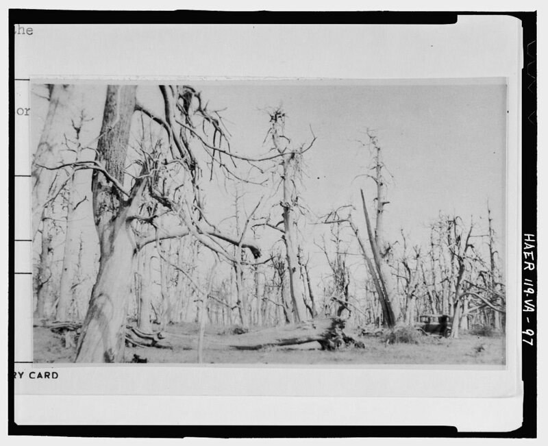 ghost forest in virginia