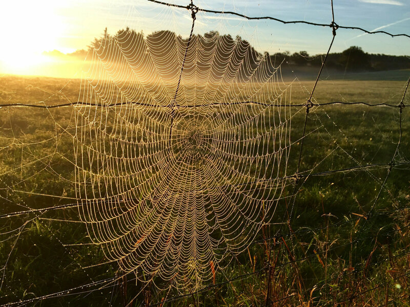 I'm walking in the spiderwebs.