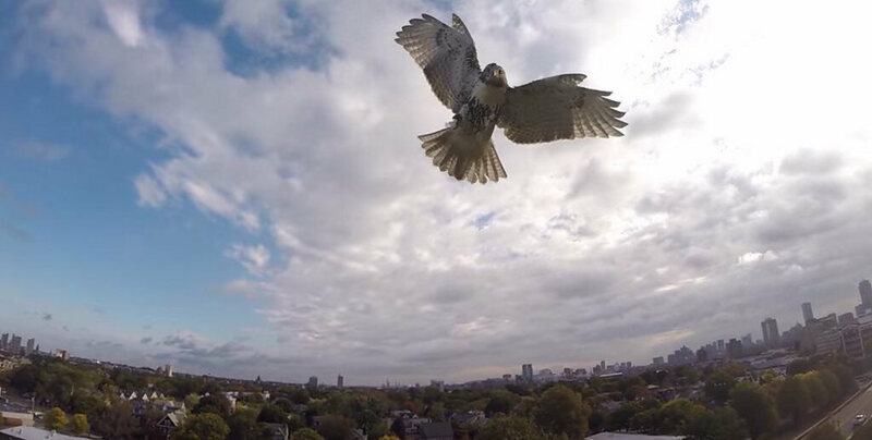 The Quest To Make New York City Stop Killing Birds Atlas Obscura