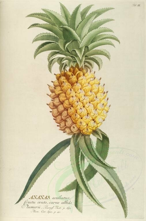 The Hidden History Of The Housewarming Pineapple Atlas Obscura