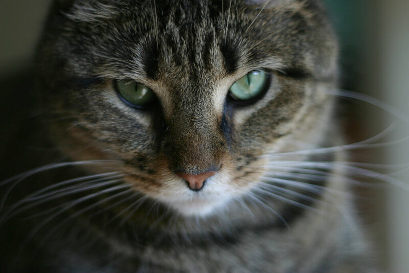 Ritualistic Cat Torture Was Once a Form of Town Fun - Atlas