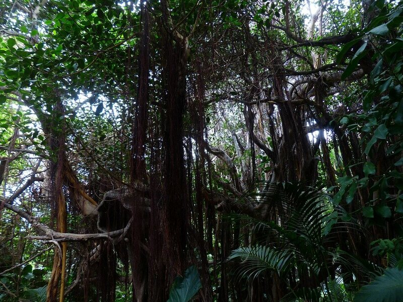Vines Are the Hipsters of Tropical Forests–Fast Increasing And