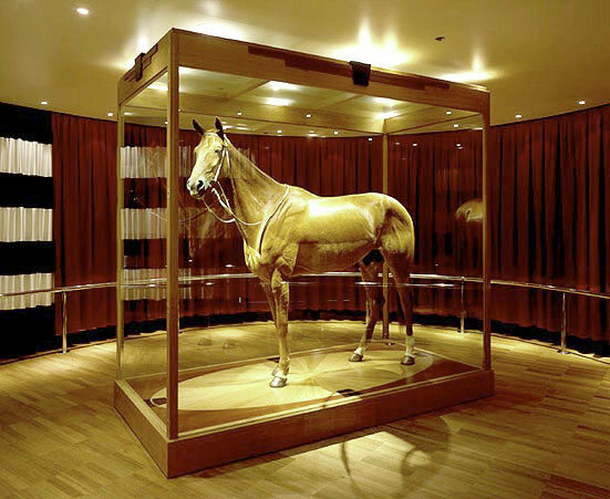Taxidermy of Phar Lap