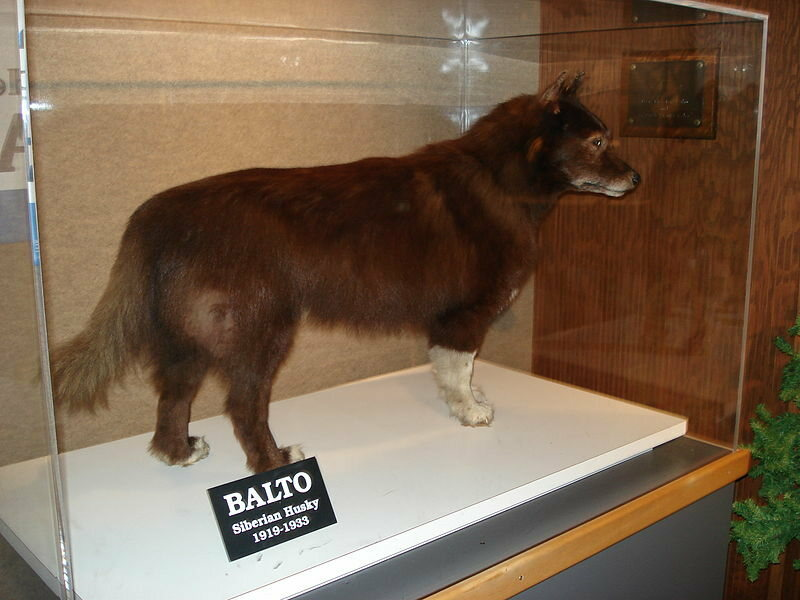 Balto the Sled Dog