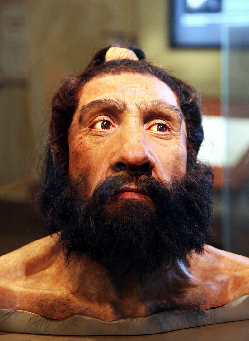 A more modern Neanderthal reconstruction, from the Smithsonian Museum of Natural History.