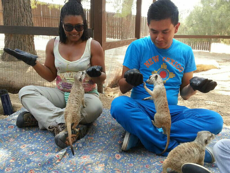 Meerkats at Fellow Earthlings Wildlife Center