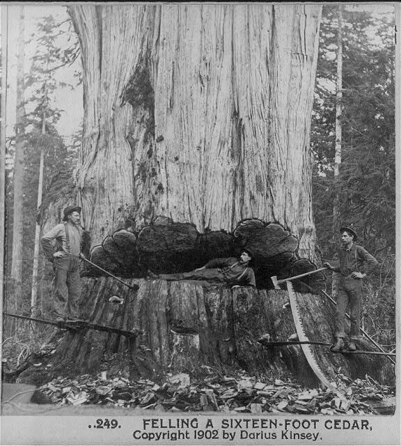 Sawn Timbers Supply In Washington State ~ Vintage photos of lumberjacks and the giant trees they