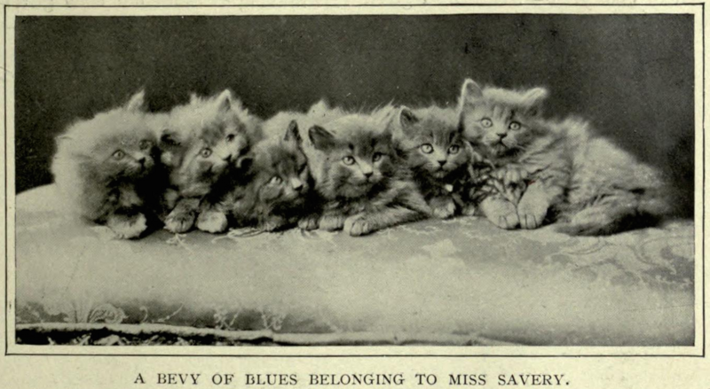 How England's First Feline Show Countered Victorian Snobbery
