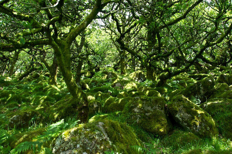 8 real world forests that look like they belong in a fantasy novel