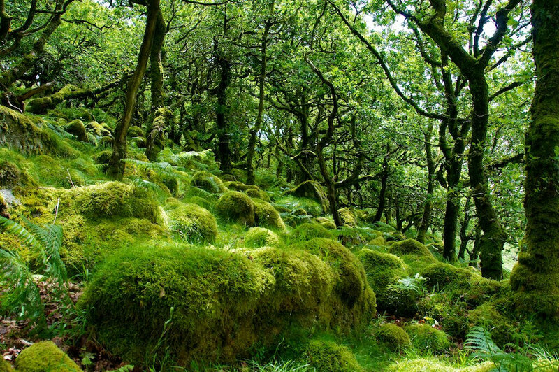 8 Real-World Forests That Look Like They Belong in a Fantasy