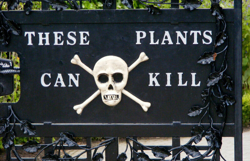 Curious Fact Of The Week A Garden That Can Kill Atlas Obscura