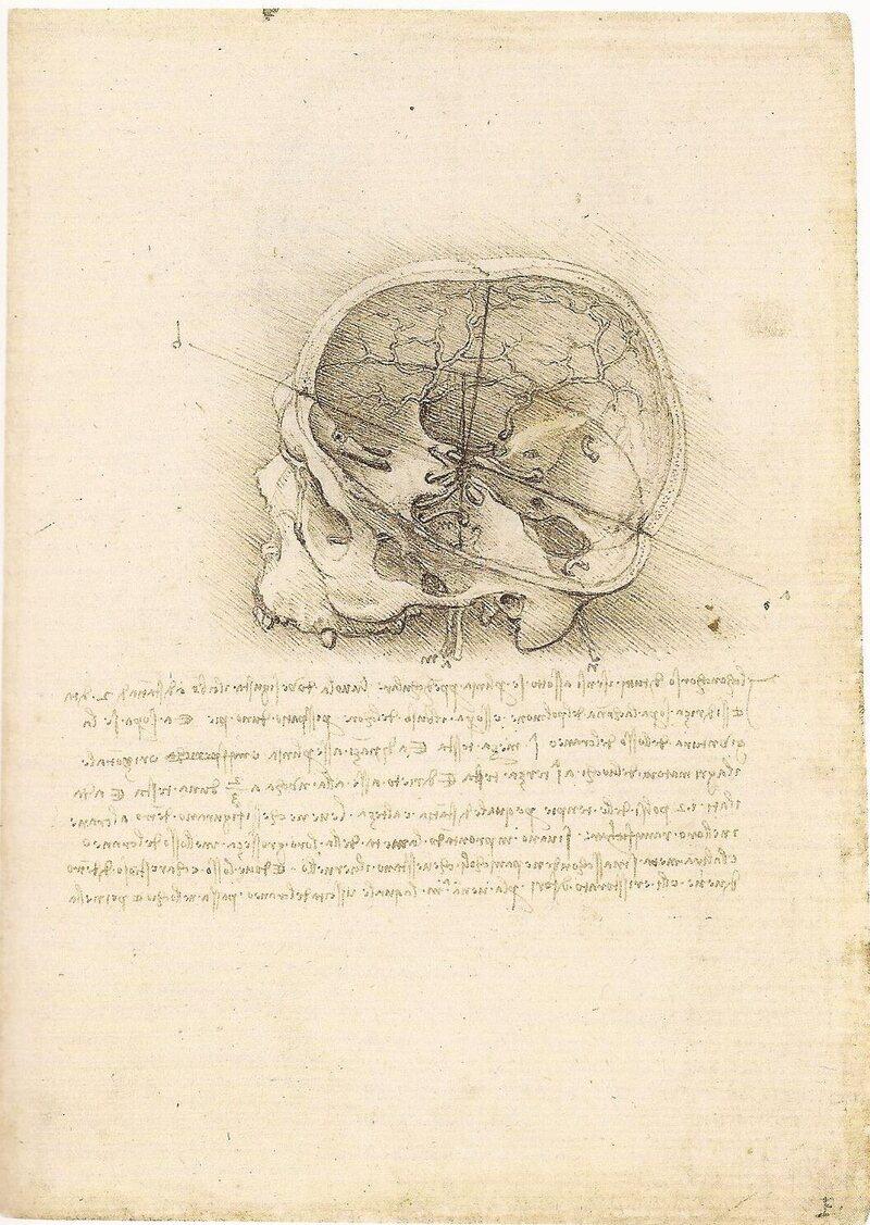 rare da vinci anatomical drawings go on display atlas obscura