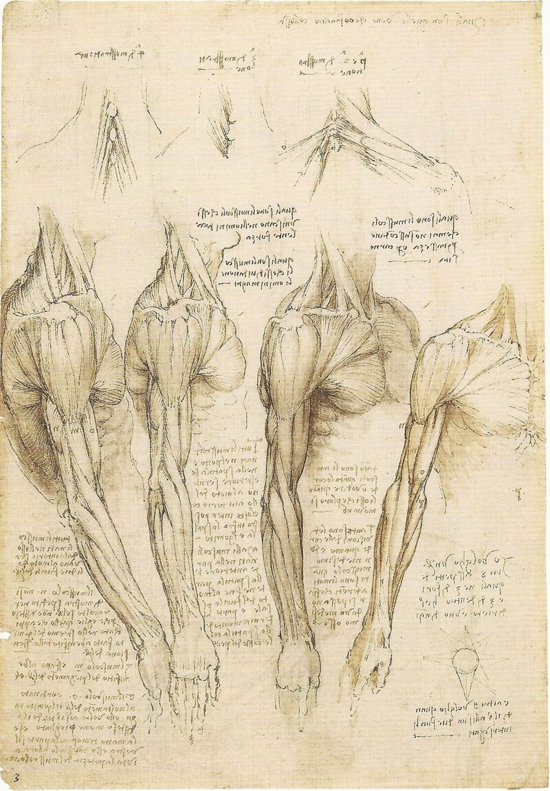 Rare Da Vinci Anatomical Drawings Go on Display - Atlas Obscura