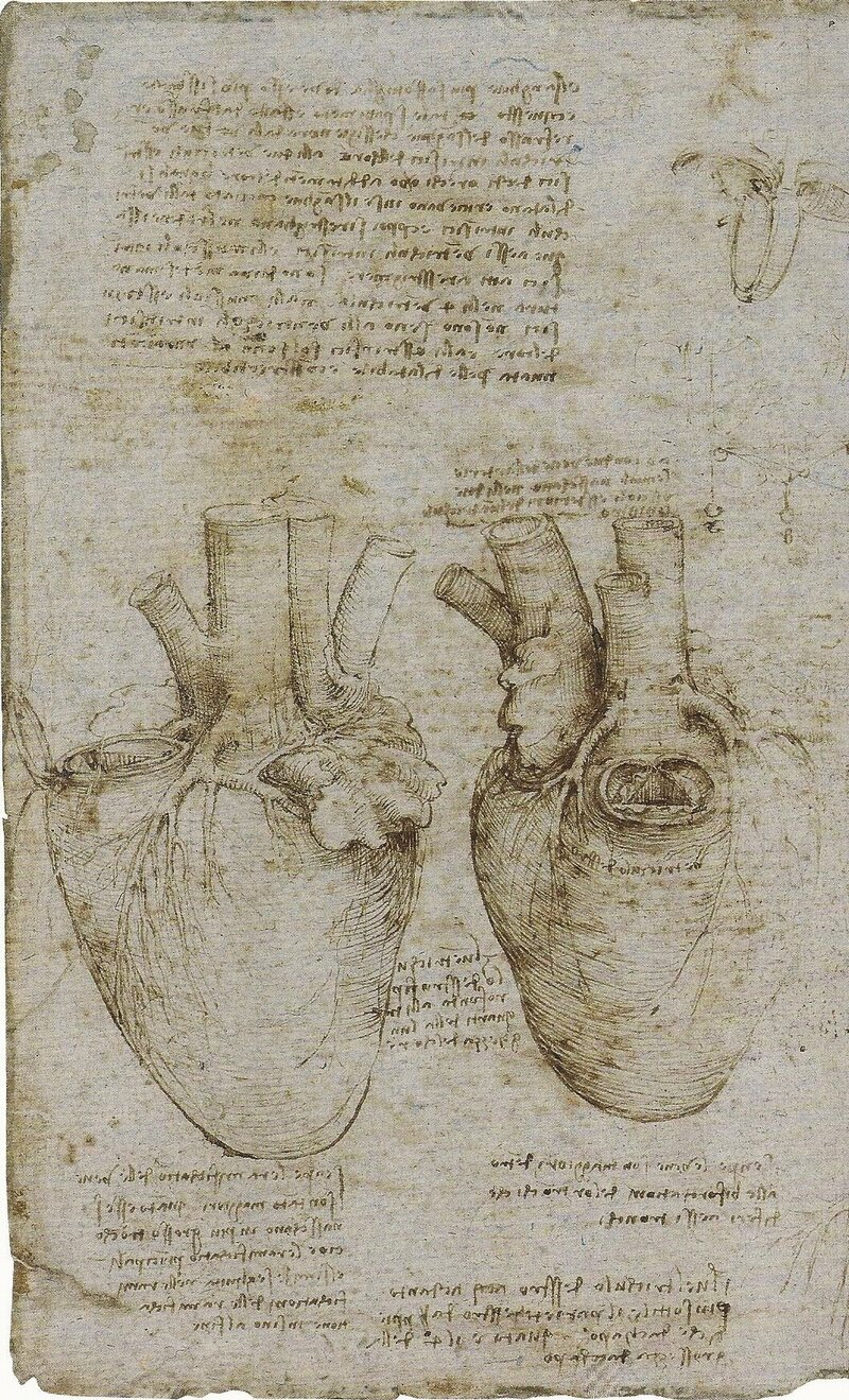 Rare Da Vinci Anatomical Drawings Go on Display - Atlas Obscura