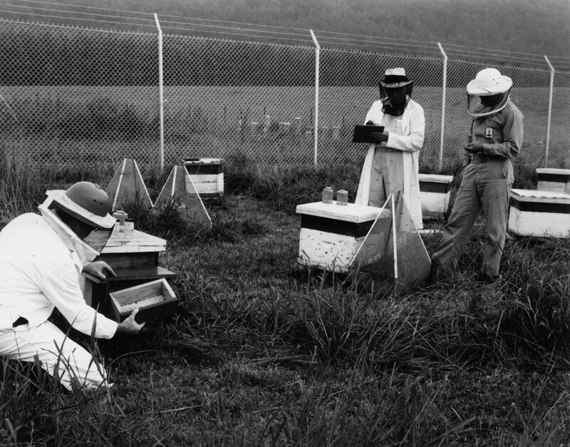 The Case Against Honeybees Gastro Obscura. Studying Honeybees 1970 Photo Us Governmentpublic Domain. Worksheet. How A Bill Bees A Law Government Worksheet At Mspartners.co