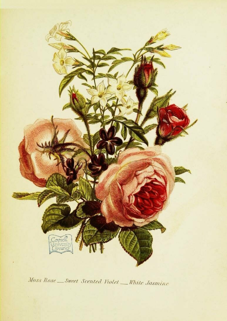 How Flower Obsessed Victorians Encoded Messages In Bouquets Atlas