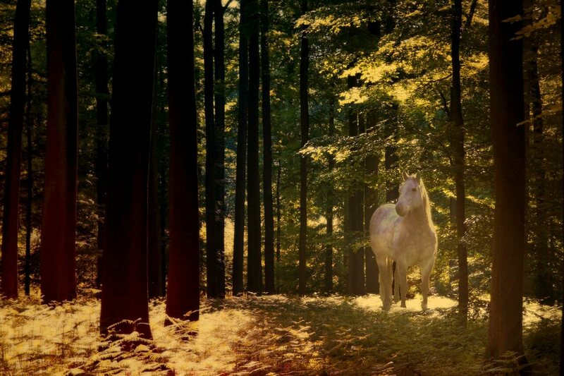 Keys Made Near Me >> An Abandoned, Saddled Horse Was Found in a British Forest ...