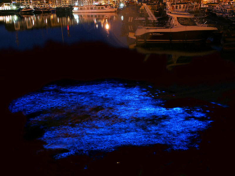 Long exposure image of bioluminescence of Noctiluca scintillans in the yacht port of Zeebrugge, Belgium