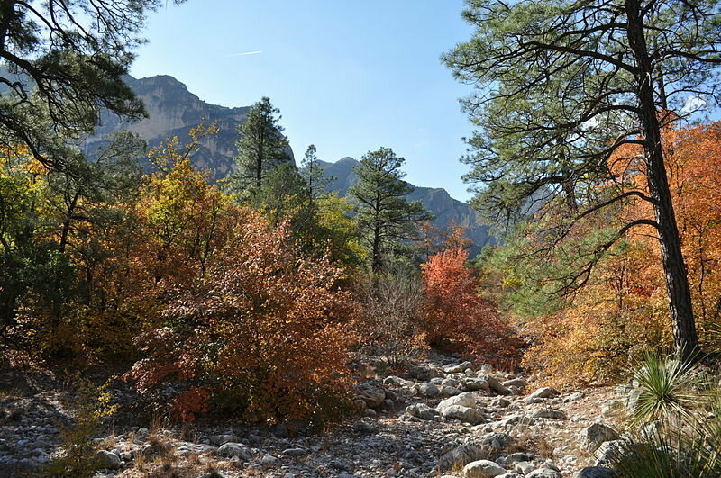 Some Fall Color in McKittrick Canyon
