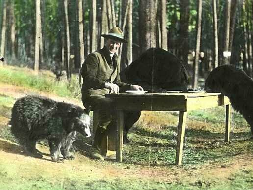 Horace Albright dines with some bear friends in 1922.