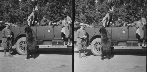 Calvin Coolidge and family, feeding famous Hold-Up Bear Jesse James in 1927.