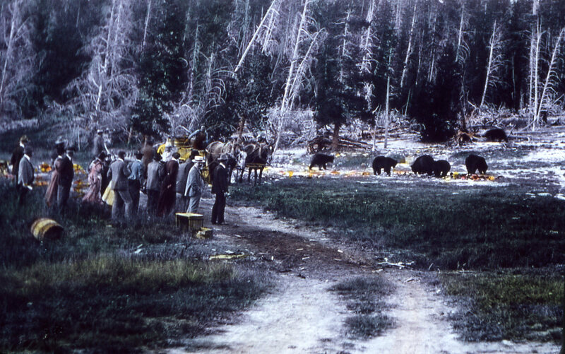 Hotel guests watch bears eat trash in the early 1900s.