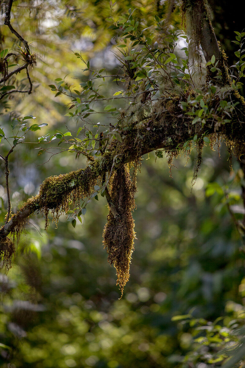 the incredible cloud forests of mexico atlas obscura