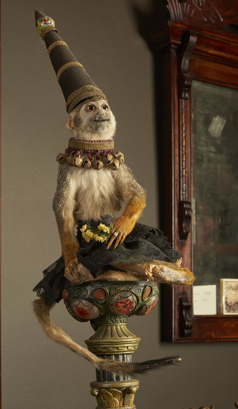 """Sadie the Monkey"":  anthropomorphic taxidermy created by collector D. L. Marian."