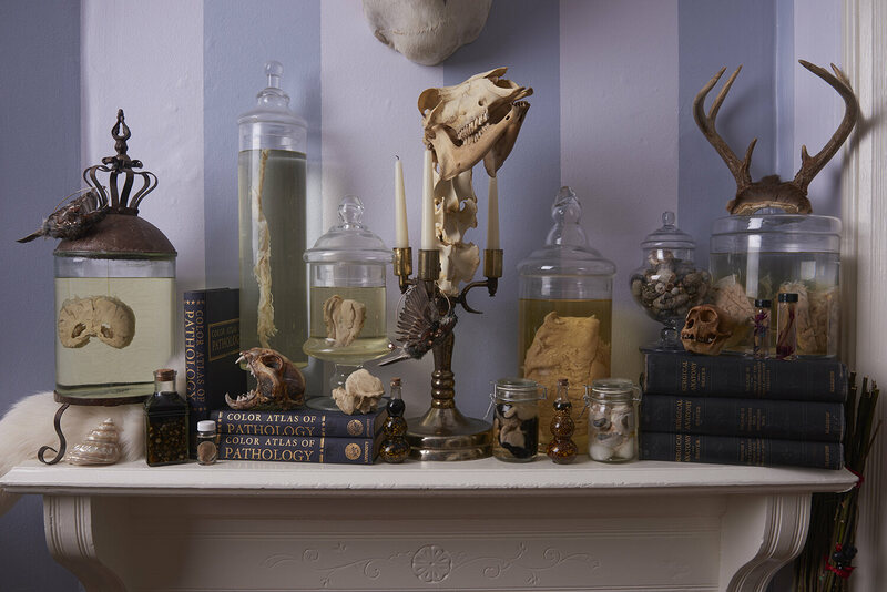Specimens in Nicole Angemi's collection include a  bone candelabrum, and a mummifed lynx skull.